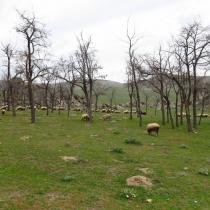 Karakayalar, Eskişehir, Türkiye