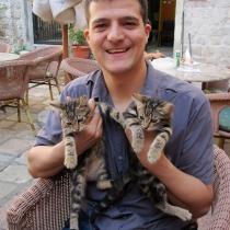 Kotor kedileri