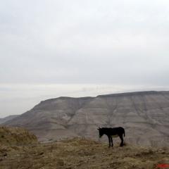 kral-yolu-wadi-mujib-20