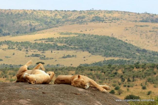 Kenya, Masai Mara Milli Parkı